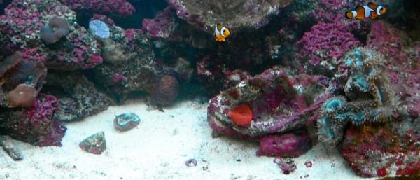 Marine soft-coral & LPS aquarium