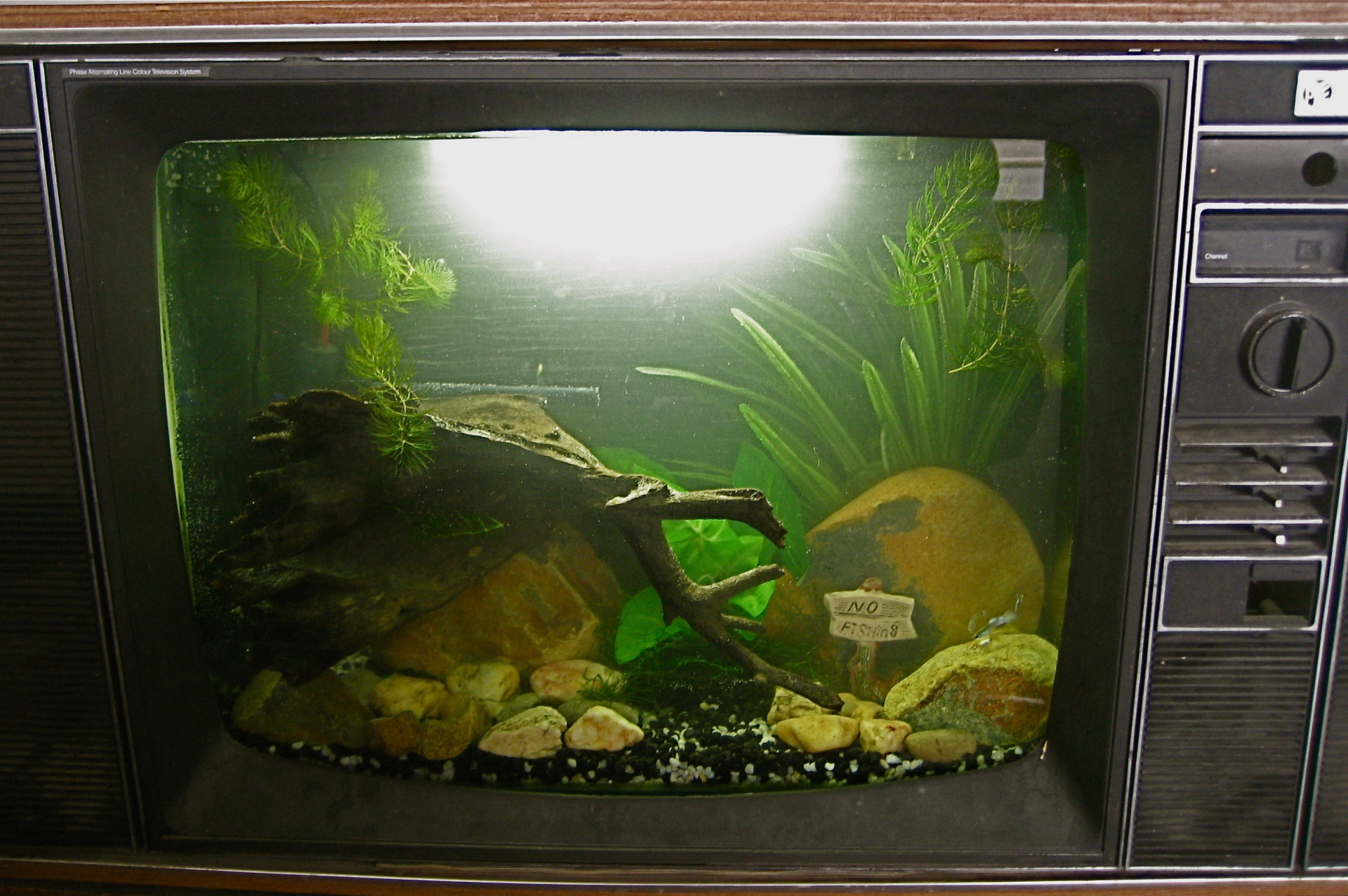 'Fish on the TV'