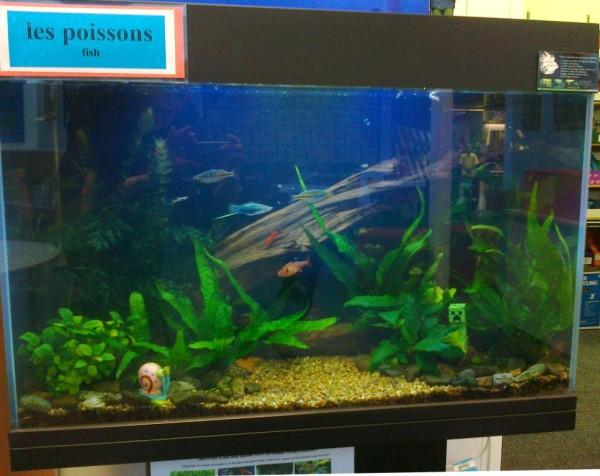 Tropical school aquarium