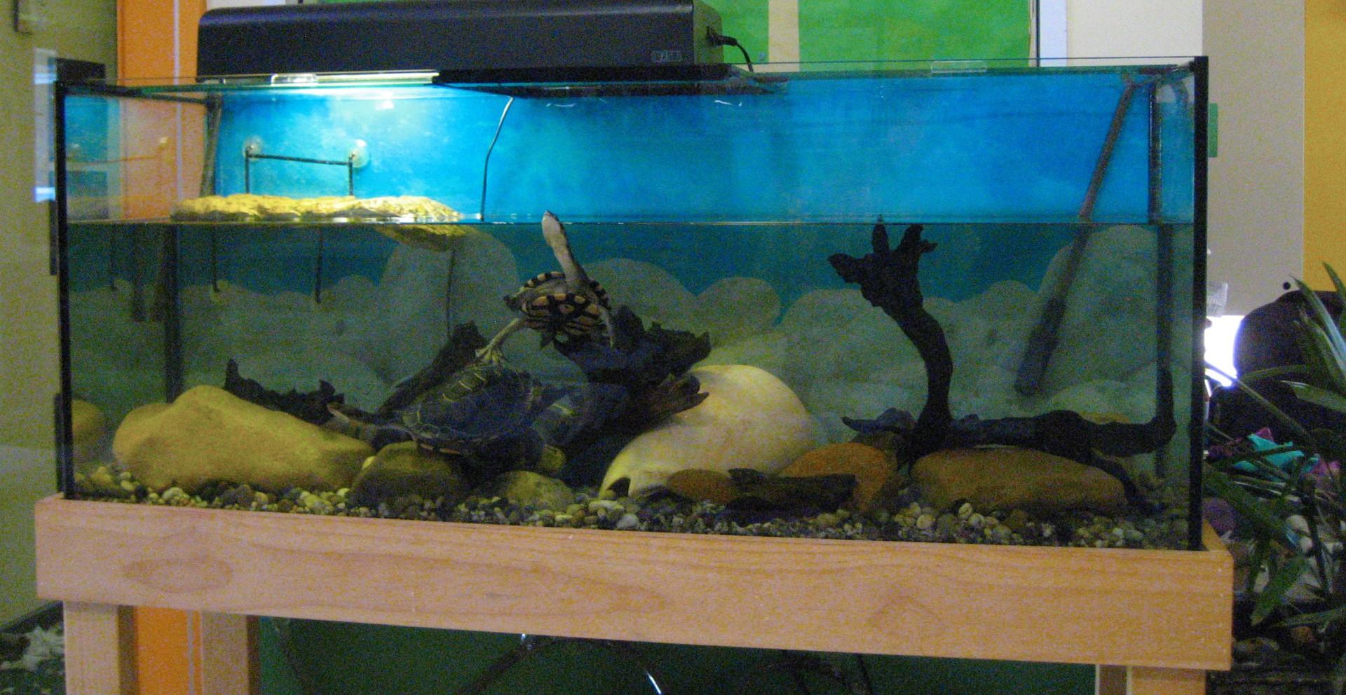 Turtle rapids
