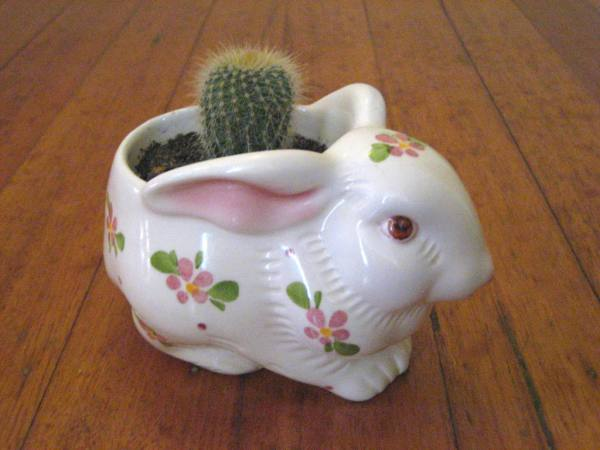 Mothers' Day Gift - Cacta-bunny