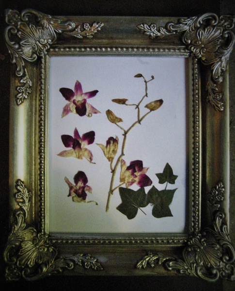 Orchid layout in ornate frame