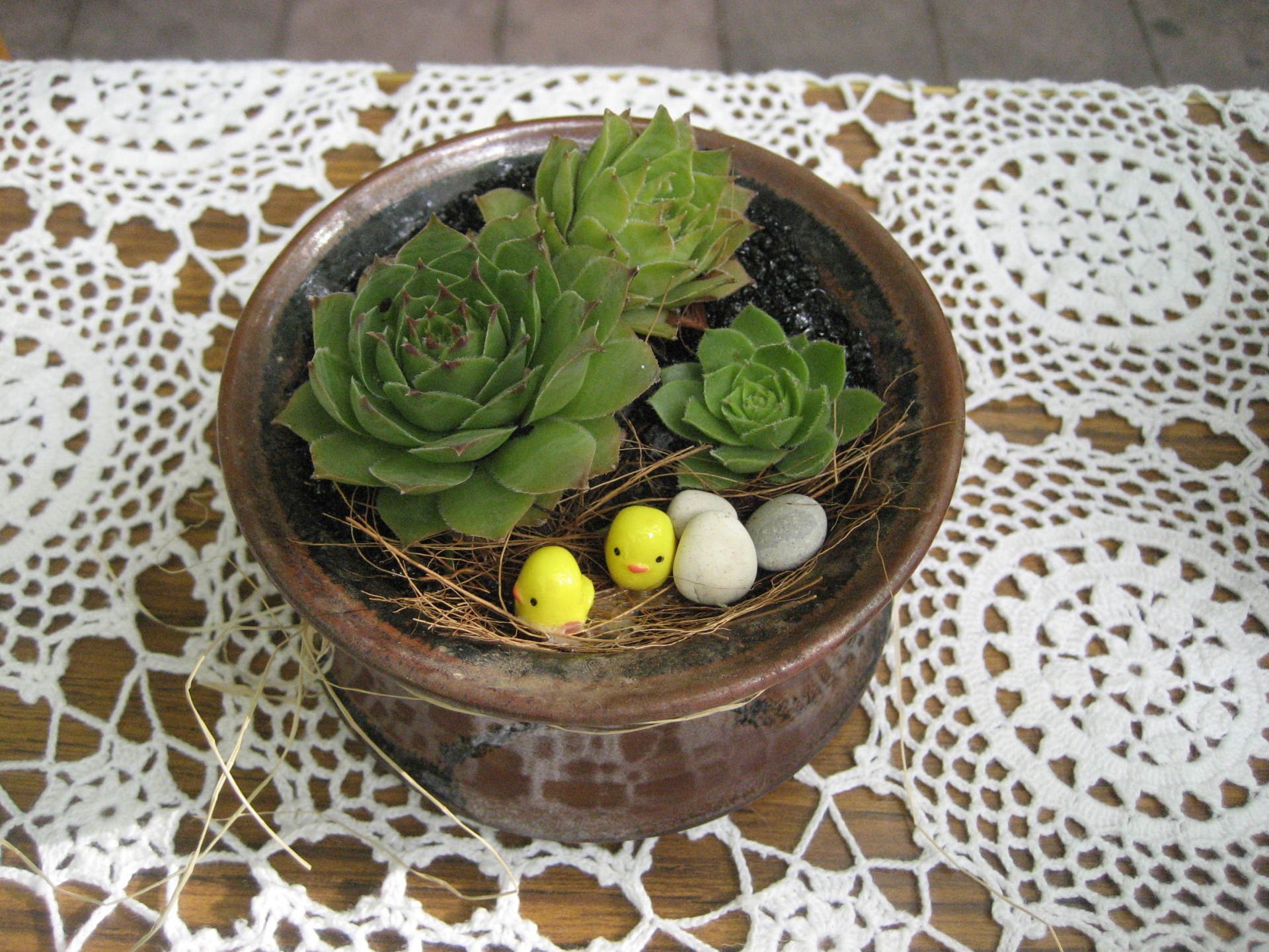Easter Gift - 'Nesting beneath the succulents'