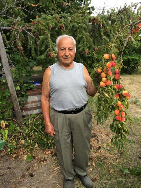 Nonno's Peaches