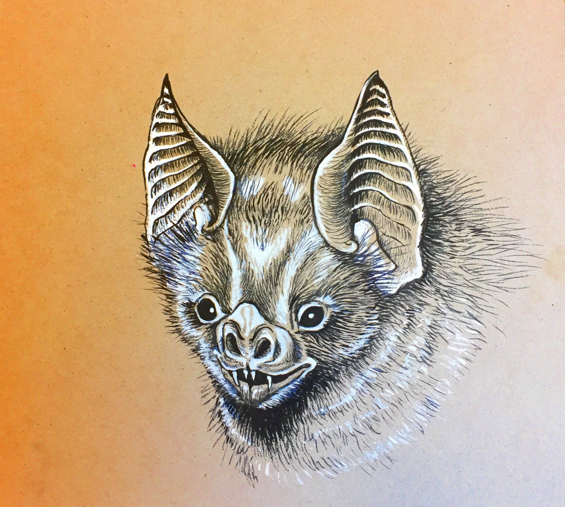 Bat Portrait