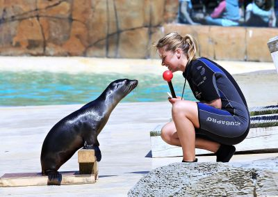 Zoo Keeper With Sea Lion During Sea Lion Show at the Blackpool Zoo.