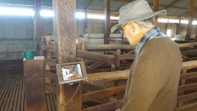 Yanga Woolshed - Video