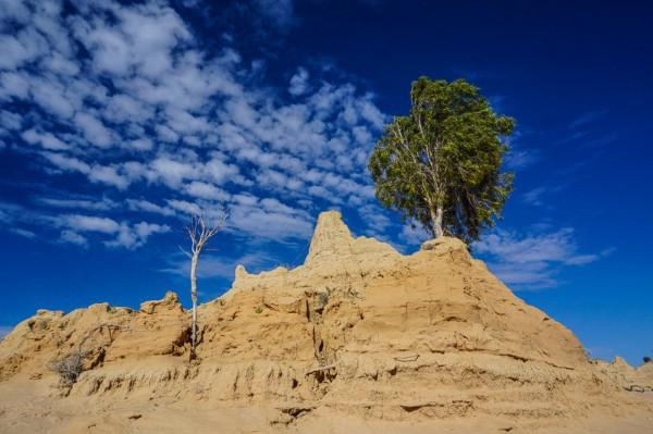 Gumbi Gumbi Tree on top of clay formation