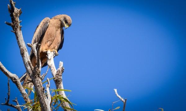 Yanga National Park