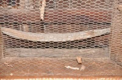 Carpet Snake Skin