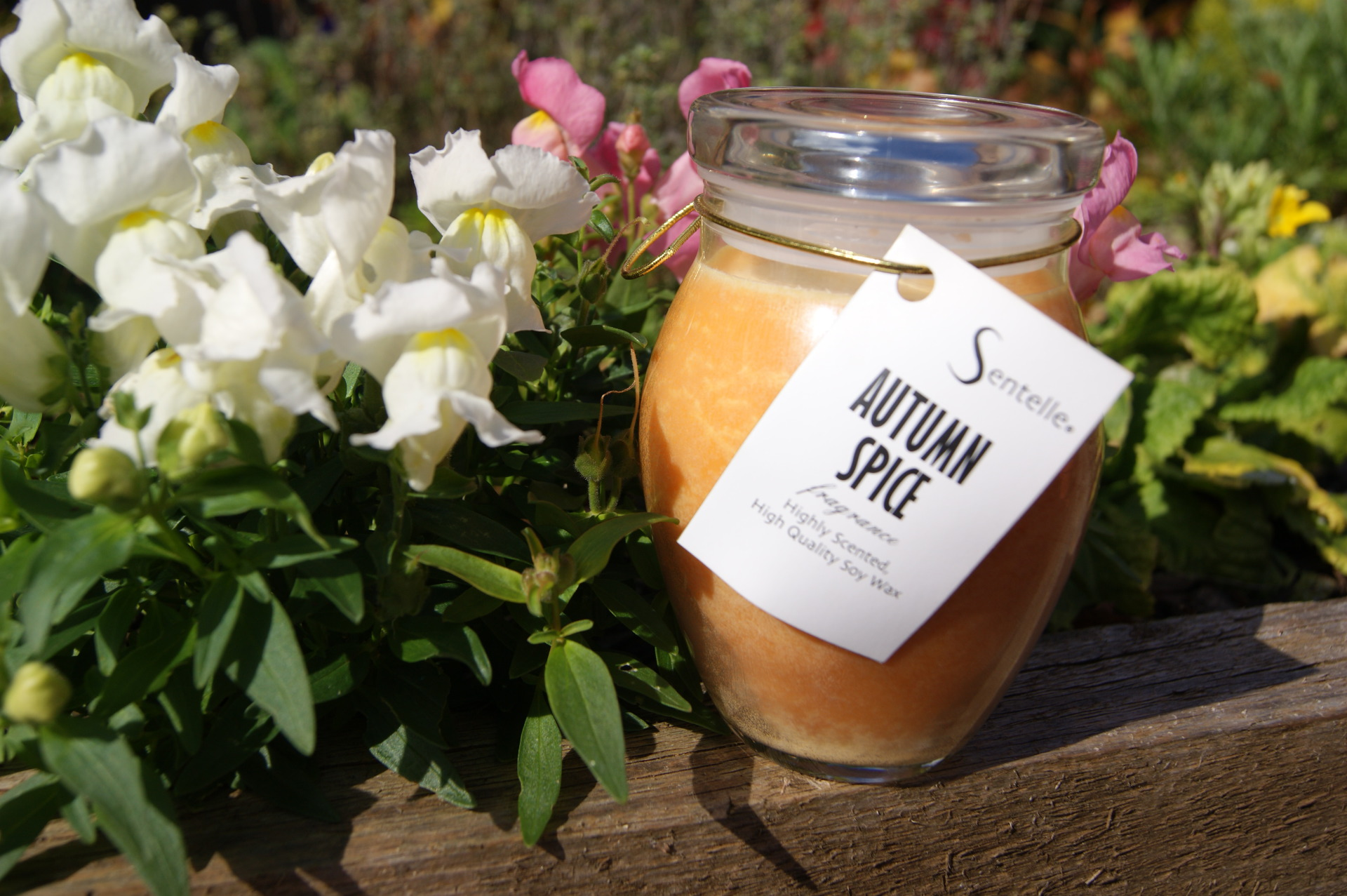 Sentelle - Autumn Spice Soy Wax Candle