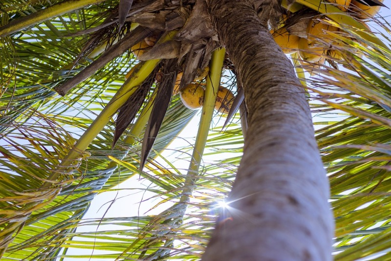 The Benefits of Using Coconut Oil
