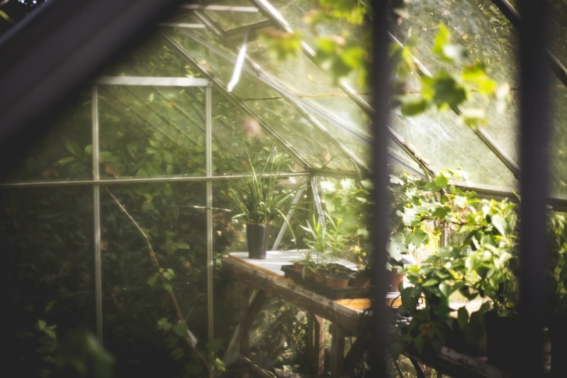 Reasons why you need a greenhouse