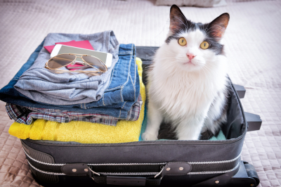 Taking Your Cat on a Caravan Holiday