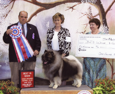 AKC Best in Show for BIS multi-BISS Ashbrook On the Move