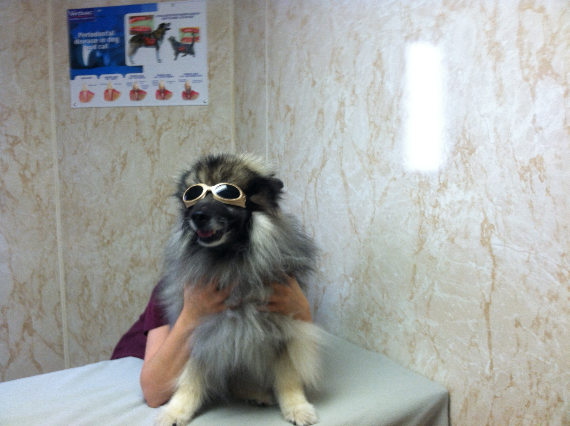 Kayla preparing for Laser Therapy