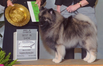 CH Chic's Prime Time Mischief winning Best Bred-By in Show