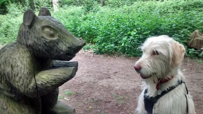 Labradoodle Training Leave It Denise Price Dog Instructor