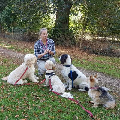 Denise Price Group Dog Training Bedfordshire Qualified Trainer
