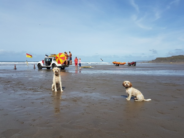 Beach Dog Training Recall Obedience on holiday