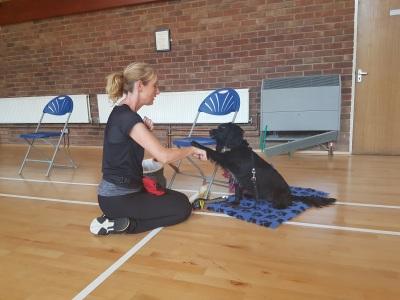 Moggerhanger Village Hall Dog Training Class