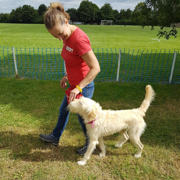 Loose Lead Walking Pulling On Lead Dog Training IMDT Dog Training Eye Contact Focus Attention Denise Price Bedfordshire