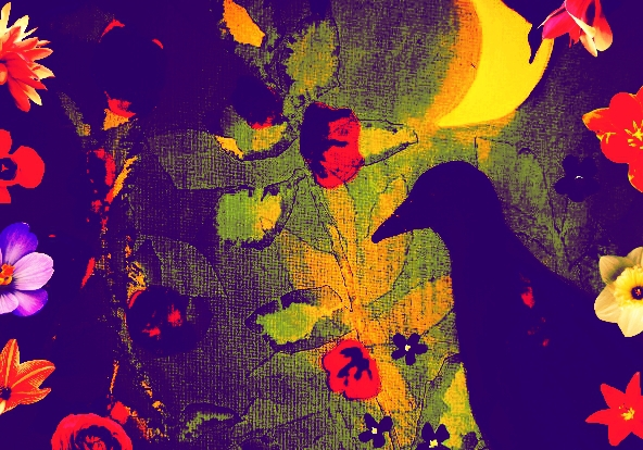 Painting Bird at Night Bridget Webber