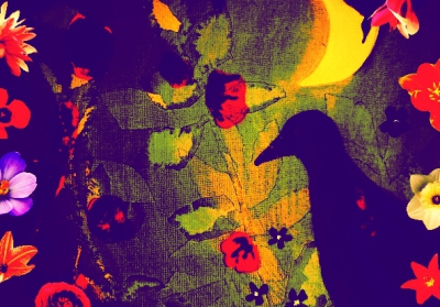Painting Bird at Night Bridget Webber