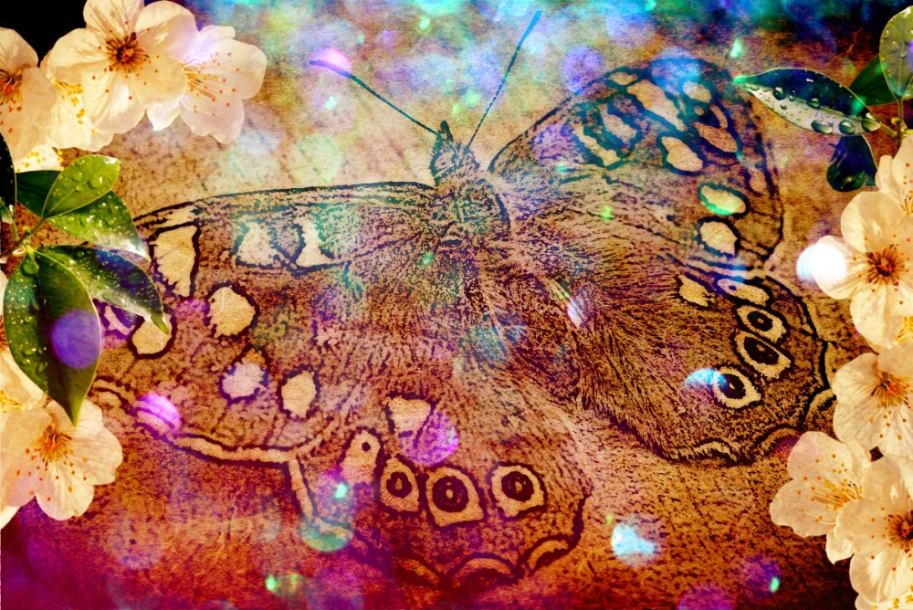 Butterfly by Bridget Webber