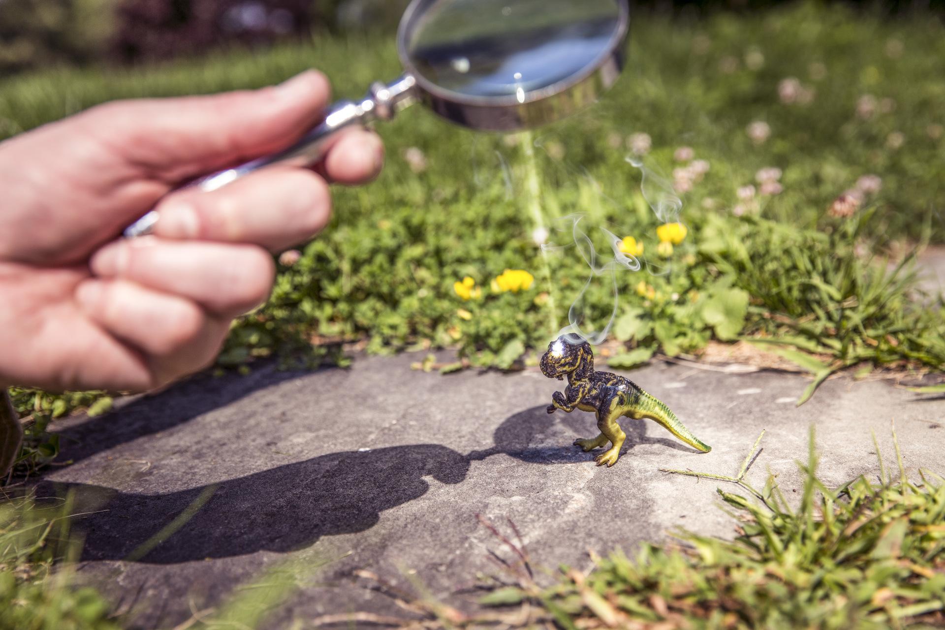 Little dinosaur by Ryan McGuire