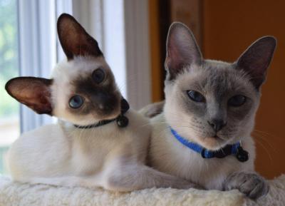 Pashmina & Katia