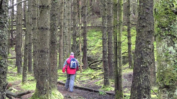 Coed Cymerau Nature Reserve