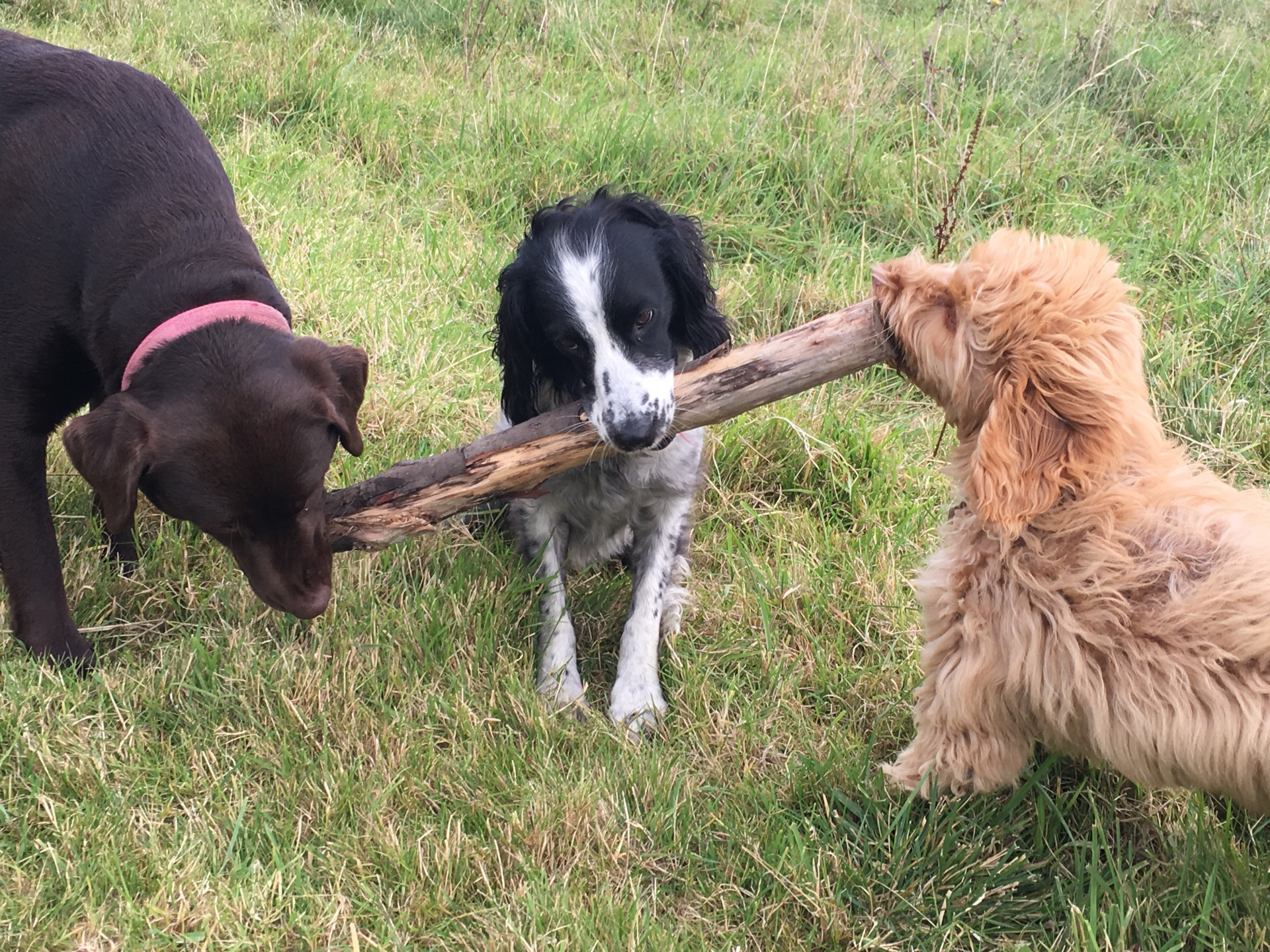 All wanting the spingers stick