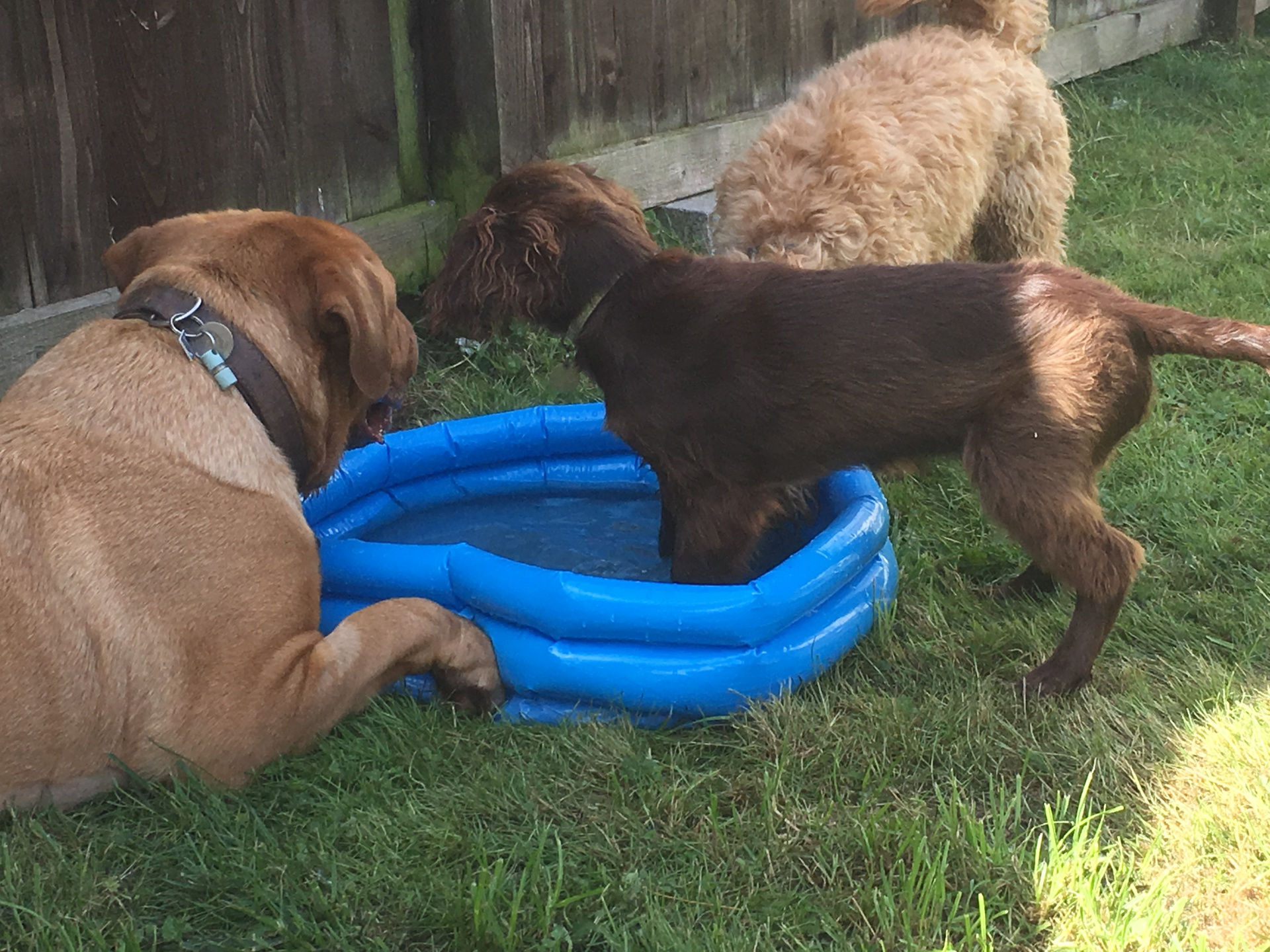 Paddling pool fun