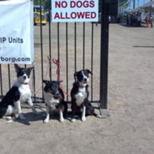 Creston Rodeo we are the only dogs allowed!!!