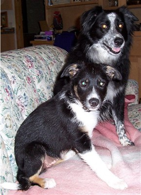 Bonnie and Kate-puppy
