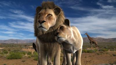 LION'S LOVE