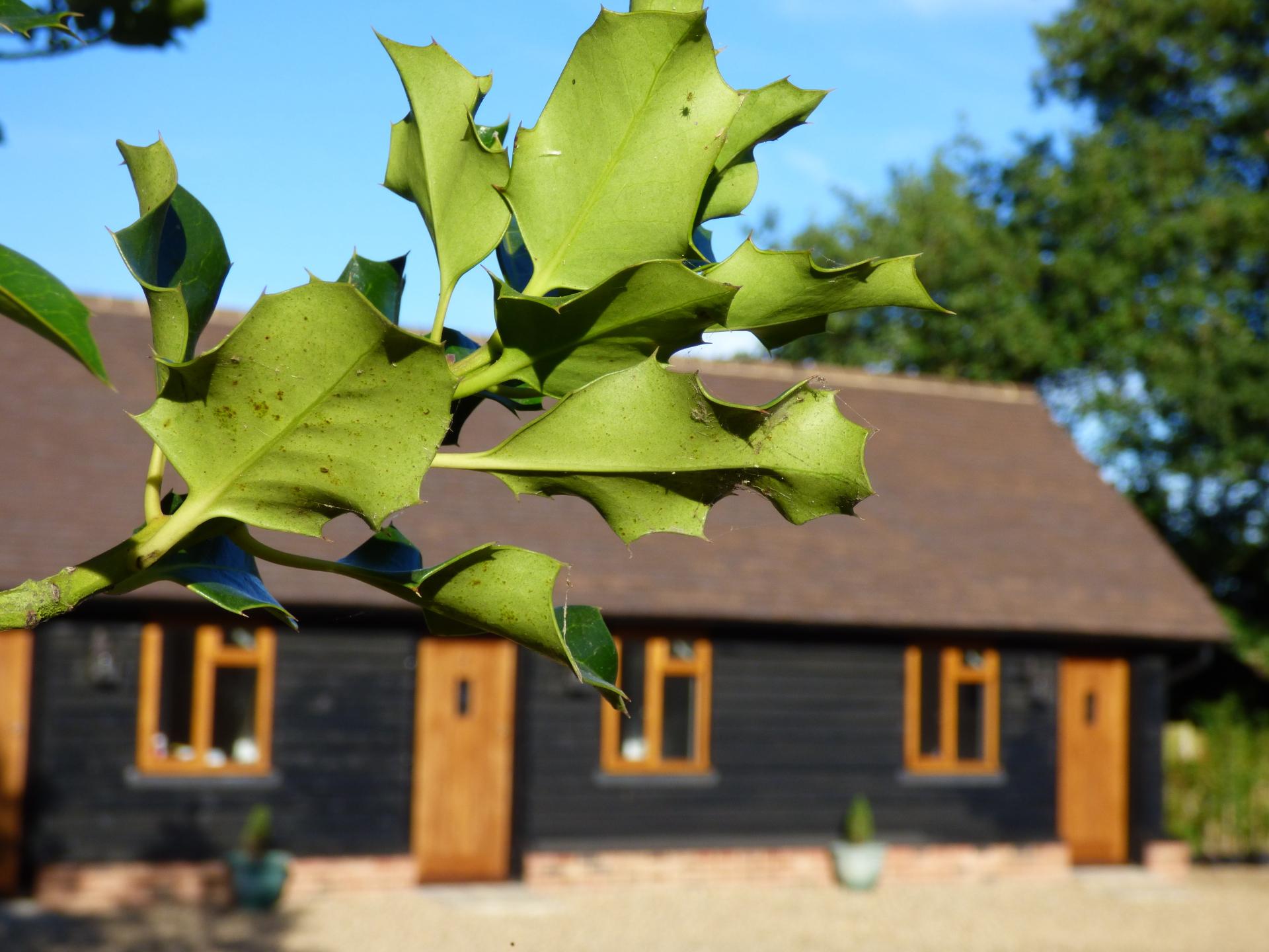 exterior view through ivy