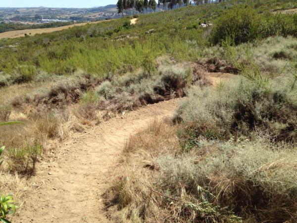 G-spot Trail Dry
