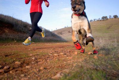 Gspot Trail Stellenbosch Dogs