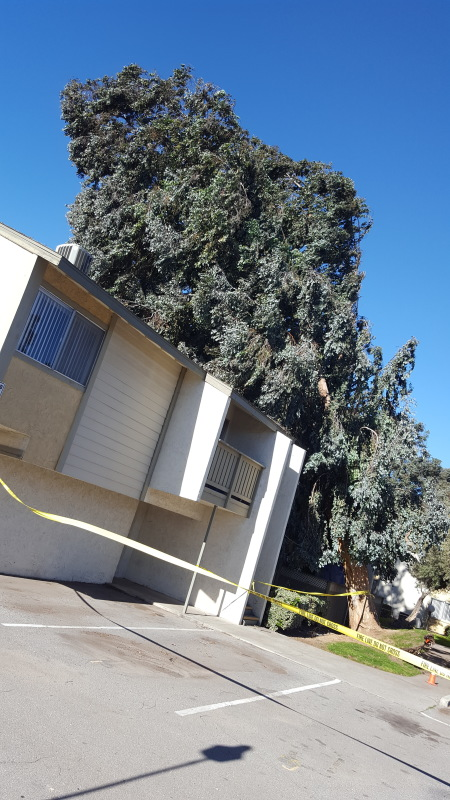 tree falls over on apartment building