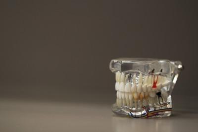dental demo model