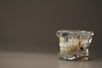 dental demo model