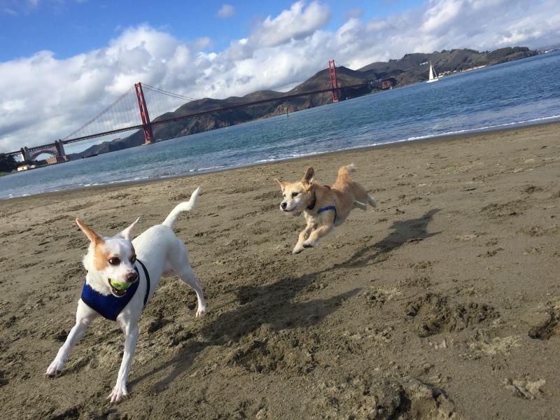 Small dog san francisco dog walker