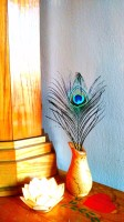 The Peacock Feather; A Promise of Miracles