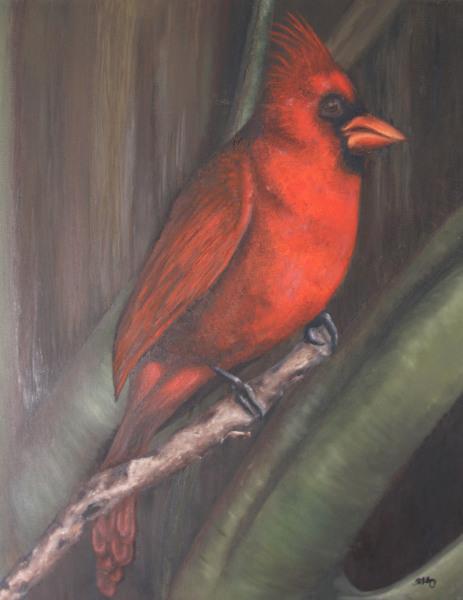 Red Cardinal Study