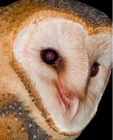 MODs FOUNDATION, MOD, Charity, Owls, Molly, McGee, MOD Meet, donation, wildlife, 501 3c,