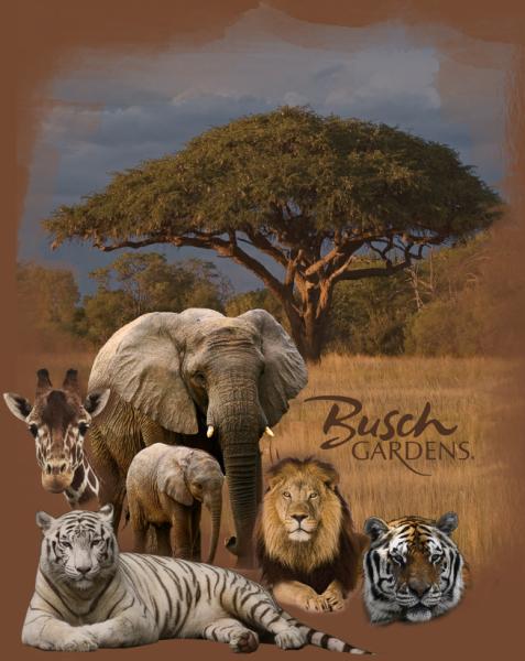 Textile design for Busch Gardents Tampa Bay