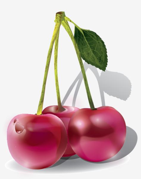 Cherries/vector Illustration