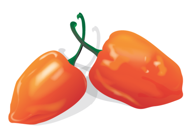 Peppers/Vector Illustration